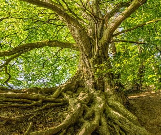 green-tree-photo-1080401-1