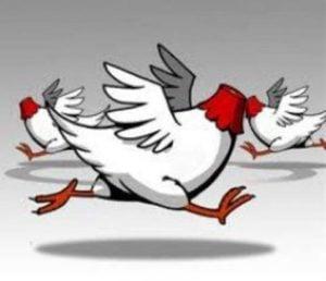 headless-chicken-image-cartoon-300x258